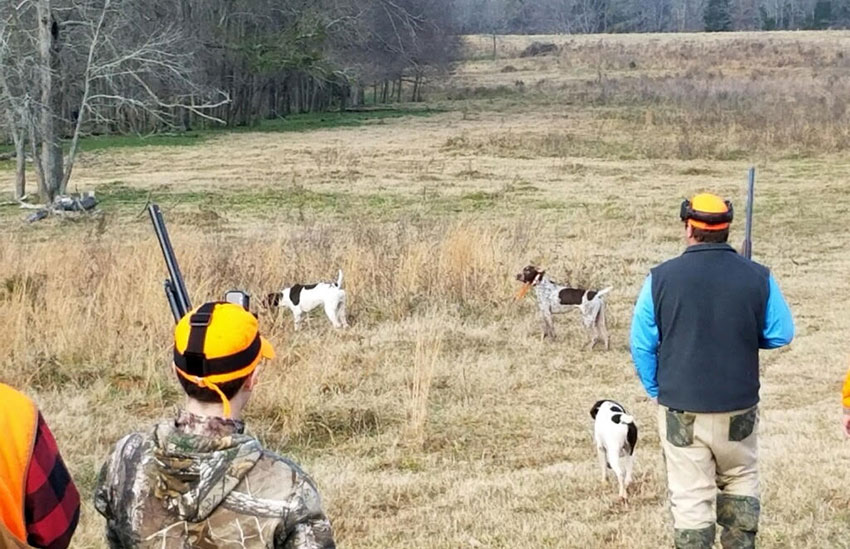 A quail hunt at High Meadows Hunting Preserve