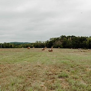 Farming soil: Restorative grazing in Laurens County