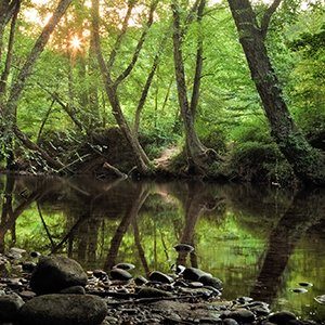 The Water Log: What do trees have to do with clean water?